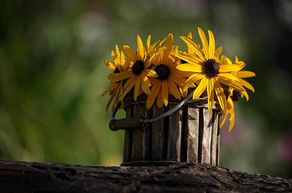 flower-2983361_960_720