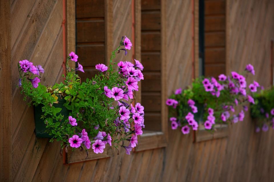 flowers-3234707_960_720